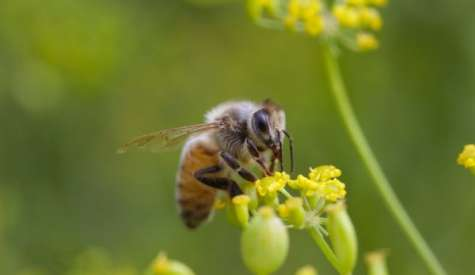 EPA Acknowledges Neonics' Harm to Bees, Then 'Bows to Pesticide Industry'